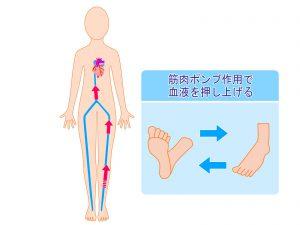 ウォーキングフォーム,歩き方,かかとから着地,ミルキングアクション,むくみ,冷え,足がつる